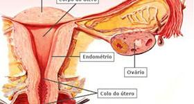 aparelho-reprodutor-feminino