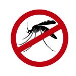 Obstetra tira dúvidas sobre dengue na gestação