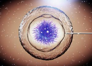 Como é realizcomo-funciona-a-fertilização-in-vitroada a Inseminação Artificial?