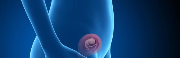 A evolução da gravidez 13ª a 16ª semana de gestação